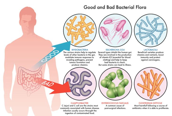 Image result for probiotics