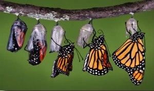 Butterfly 19f6613